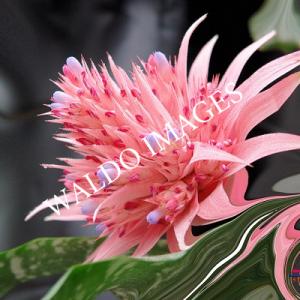 Een prachtige bloem waarbij haar schoonheid versterkt is door digitale penseelstrepen.