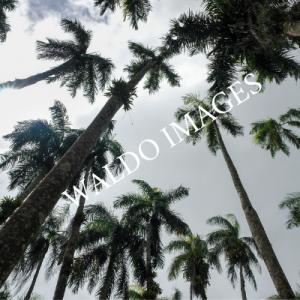Palmentuin in Paramaribo.